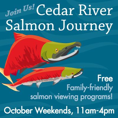 Cedar River Salmon Journey
