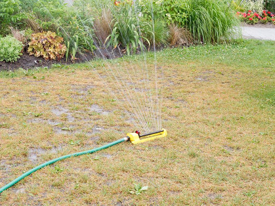 Watering golden lawn
